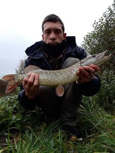 Northern Pike — Remy Lips