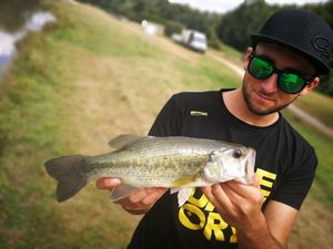 Largemouth Bass — Guillaume Nuget