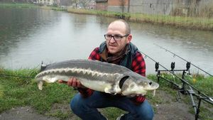 Siberian Sturgeon — Richard Schweitzer
