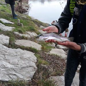 Rainbow Trout — Lucas Fishing