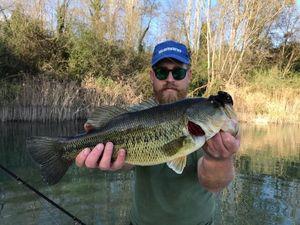 Largemouth Bass — Leonardo Campion