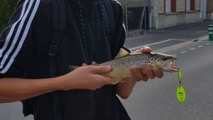 Brown Trout — Benoit Vallette