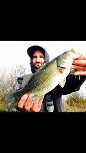 Largemouth Bass — Fisher Price