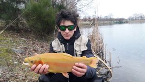 Golden Trout — Gabriel Goyé