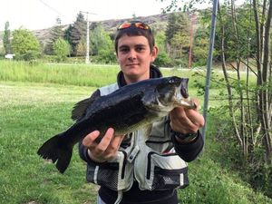 Largemouth Bass — Thomas Lheritier