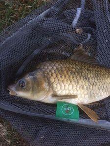 Poisson Rouge — pescaïre sud
