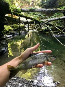 Brown Trout — Jean-baptiste Brunet