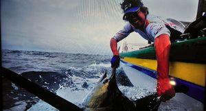 Marlin Bleu (Atlantic) — Quentin Colas