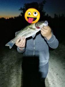 European Bass — Adrien fishingriverandsea