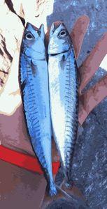 Mackerel — les pêcheur du 11 (youtube)