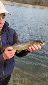 Lake Trout — loris clauzon
