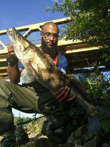 Zander — Djibril skatefish