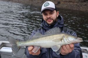 Zander — Julo Fishing