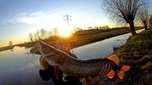 Northern Pike — Cédric Fishtique