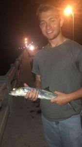 Ladyfish — Logan Dorman
