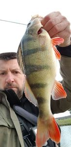 European Perch — Andral Christophe