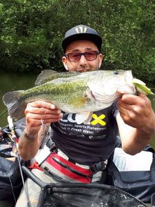 Largemouth Bass — Yassin Chiheb