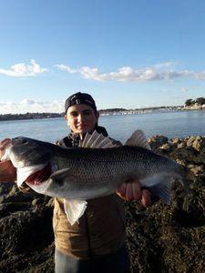 European Bass — Matt cdl