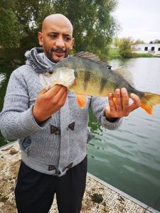 European Perch — Trinita skatelfish