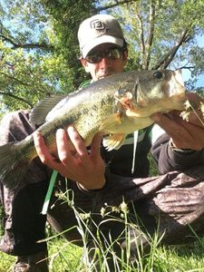 Largemouth Bass — Nicolas Cure