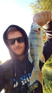 European Perch — Rod Fishing
