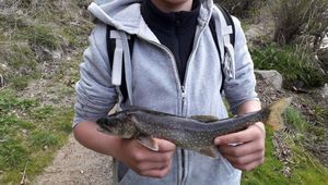 Lake Trout — Andeol Gramayze