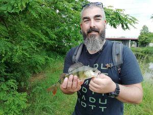 European Perch — Raph Konrad
