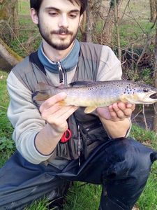 Brown Trout — Théo Sauzet
