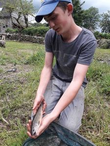 Brook Trout — Raphaël Chabrillat