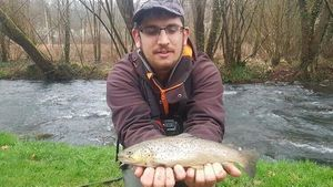 Brown Trout — Nathan Branlé