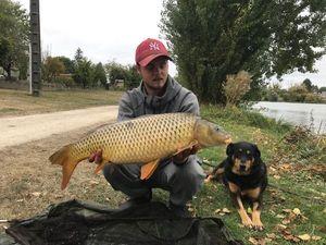 Common Carp — Sullivan Fiedler
