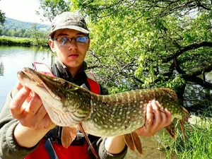 Northern Pike — Kr Fishing