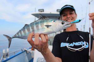 Atlantic Bonito — Sebcricri Fishing