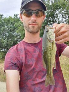 Largemouth Bass — Hans Peneau