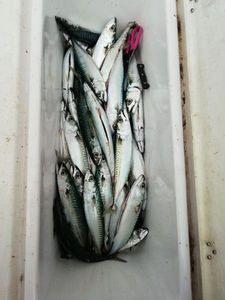 Mackerel — Jonathan Loisel