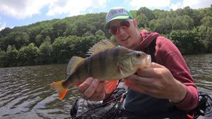 European Perch — Ephory Fishing