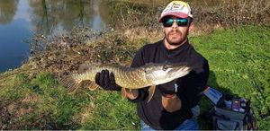 Northern Pike — Raynald Bourrier