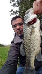 Largemouth Bass — Jean-Leandre Montero