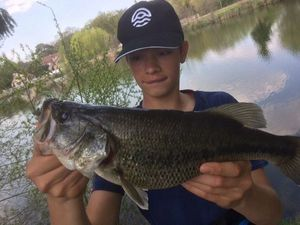 Largemouth Bass — Alexandre Godfrin