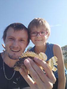 Brown Scorpionfish — Choquet Denis