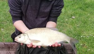 Common Bream — cool fishing 86