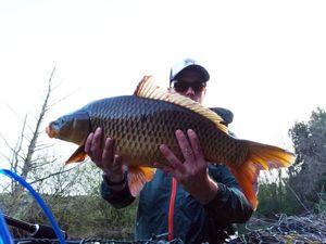Common Carp — Jordan Monkey Fishing