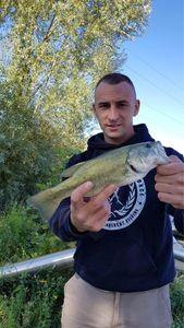 Largemouth Bass — Yohann Lesueur
