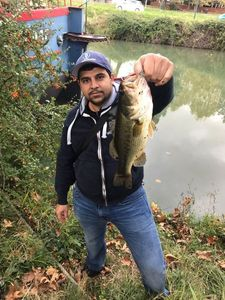 Largemouth Bass — Greg FishFriender