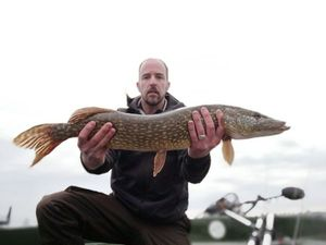 Northern Pike — Davy Boschat