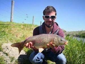 Common Carp — Quentin Trevel