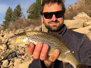 Brown Trout — Morgan CALU