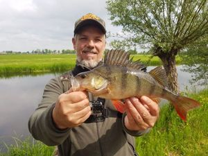 European Perch — Alain Laoureux