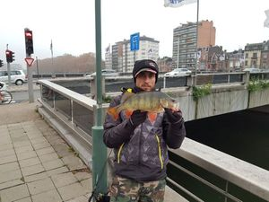 European Perch — Sebastian Ungureanu