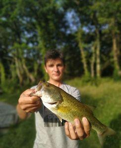 Largemouth Bass — Matt cdl